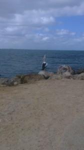 Coogee Beach 4