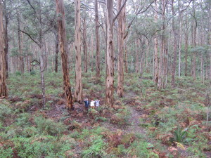 Boranup Forest 2